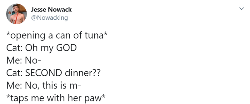 The battle of a cat and a can of tuna | tweet by Nowacking *opening can tuna* Cat: Oh my GOD No- Cat: SECOND dinner No, this is m taps with her paw* Cat: Father have provided SeA MEAT Please stop *jumps up on counter Jesus christ Cat am BLESSED dad holy FUCK Please don't- Cat: MEEOOO