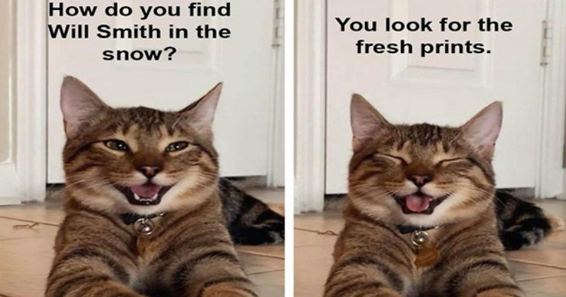 chestnut stripes smiling cat meme dad jokes aww cute funny lol memes cats | do find Will Smith snow? look fresh prints.