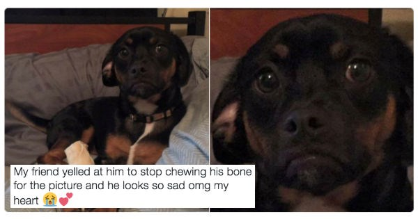 Someone Was Mean to This Girl's Dog and Twitter Is Having None of It