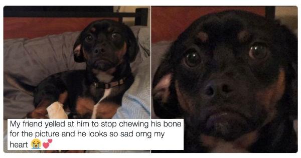 Sad dogs twitter - 1038341