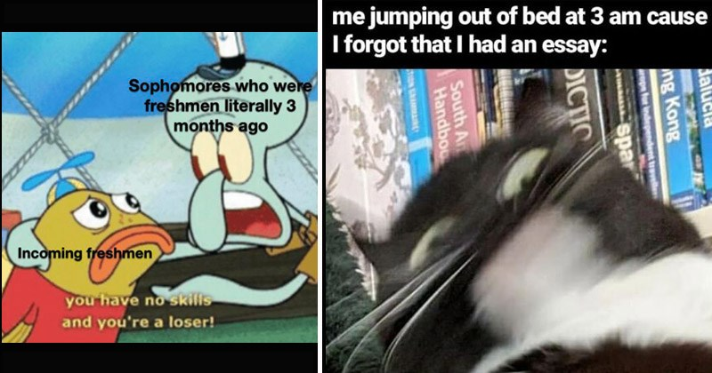 Funny dank memes about being in high school, students   squidward talking to a kid fish Sophomores who were freshmen literally 3 months ago Incoming freshmen have no skills and loser! blurry motion pic of cat: jumping out bed at 3 am cause forgot had an essay