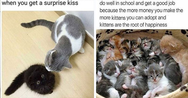 funny cat memes caturday lol animals cats cute aww animals | get surprise kiss: black fuzzy cat opening eyes wide when another cat kisses it. do well school and get good job because more money make more kittens can adopt and kittens are root happiness
