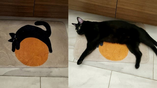 cats camo camouflage funny lol animals cute aww cat | pic of a rug with an image of a black cat wrapped around a yellow moon, then pic of a real black cat lying on top of the drawn one in a similar position