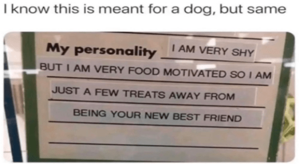 Fresh animal memes | know this is meant dog, but same AM VERY SHY My personality BUT AM VERY FOOD MOTIVATED SO AM JUST FEW TREATS AWAY BEING NEW BEST FRIEND