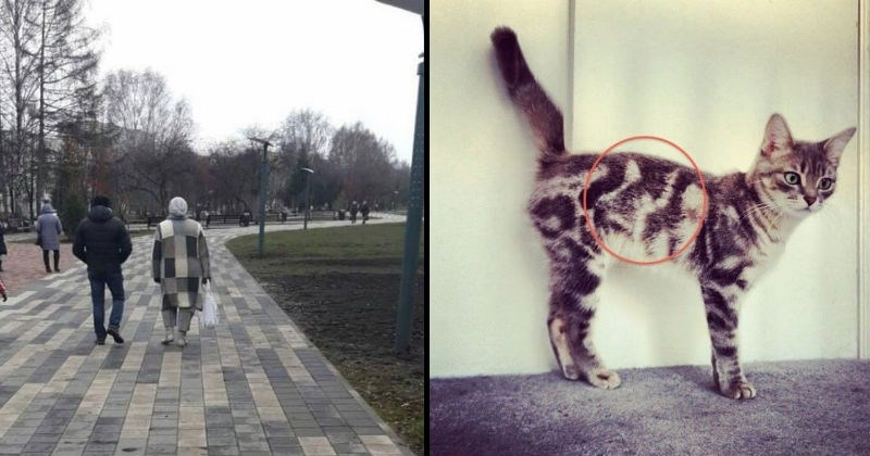 Weird moments of copies in real life and other things that look like a real life glitch | person in a grey patch coat that matches the brick road they're walking on. cat with striped fur in a pattern that looks like a cat's head