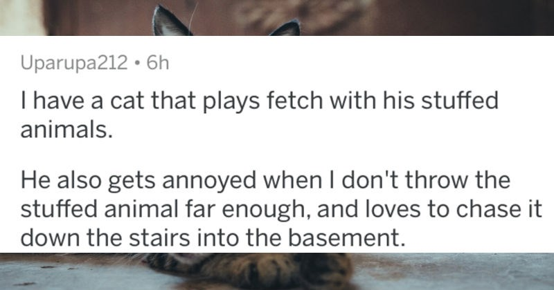 AskReddit replies to pet owners revealing their animals' quirkiest behavior | posted by Uparupa212 have cat plays fetch with his stuffed animals. He also gets annoyed don't throw stuffed animal far enough, and loves chase down stairs into basement.