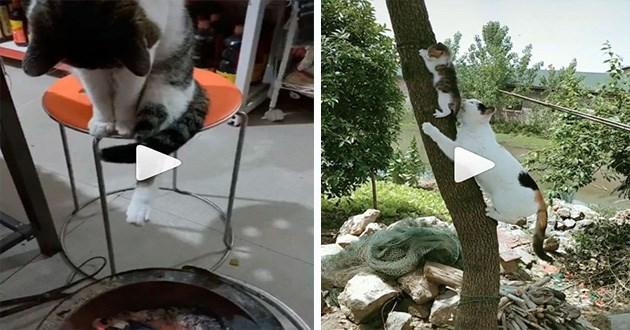 cats funny instagram videos lol animals cute aww cat kitten weird