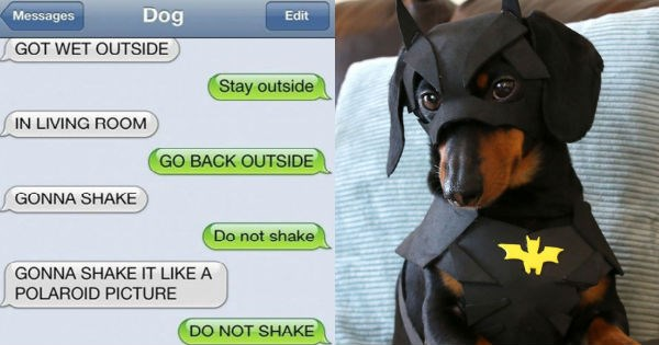 dogs conversation superheroes batman texting funny - 1040901