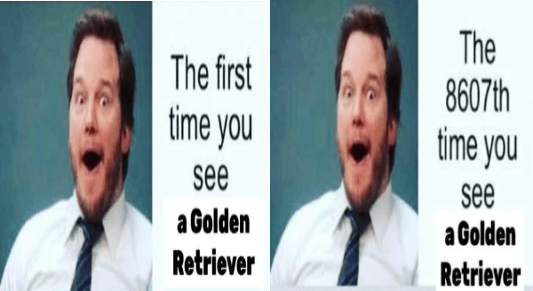 Wholesome animal memes | chris pratt andy dwyer parks and rec the first time you see a golden retriever the 8607th time you see a golden retriever