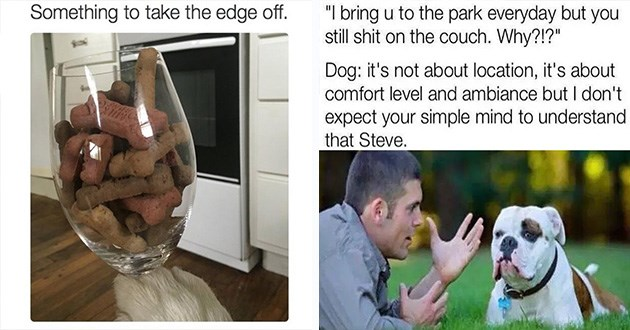funny doggo dogs memes dog lol animals cute | Something take edge off: wine glass filled with doggy treats. bring u park everyday but still shit on couch. Why Dog s not about location s about comfort level and ambiance but don't expect simple mind understand Steve. man lying in the grass talking to a bulldog