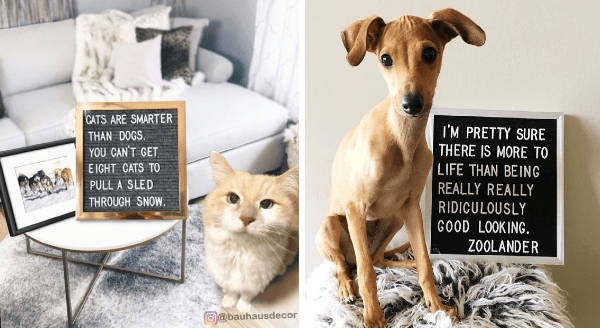 Funny Pet Messages Written on Letter Boards | CATS ARE SMARTER THAN DOGS CAN'T GET EIGHT CATS PULL SLED THROUGH SNOW. PRETTY SURE THERE IS MORE LIFE THAN BEING REALLY REALLY RIDICULOUSLY GOOD LOOKING. ZOOLANDER.
