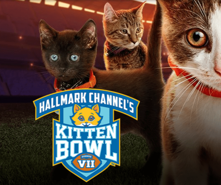 "Hallmark Channel Is Bringing Back ""Kitten Bowl Sunday"" 