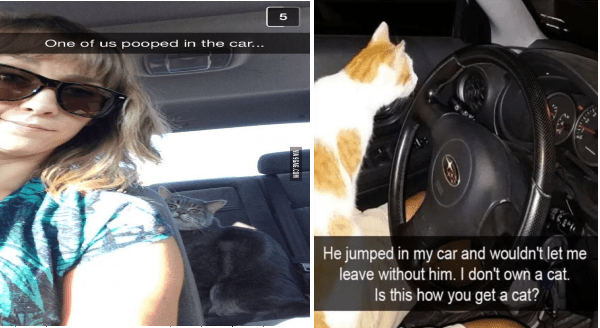funny snaps of cats in cars | woman in sunglasses taking selfie in car with a cat sitting in the backseat: One us pooped car. cat sitting in front of a steering wheel: He jumped my car and wouldn't let leave without him don't own cat. Is this get cat?