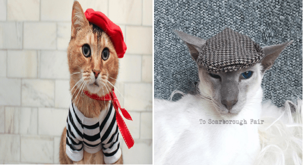 Photos of cats in berets | cute orange cat dressed like a frenchman with a red beret, red ribbons around its neck and a black and white striped shirt. sophisticated looking white cat wearing a knitted beret.