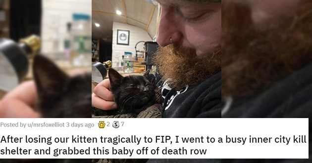 adopt adopted cats dogs kittens puppies aww cute heartwarming shelter rescue animals | bearded man cradling a black cat: After losing our kitten tragically to FIP, I went to a busy inner city kill shelter and grabbed this baby off of death row