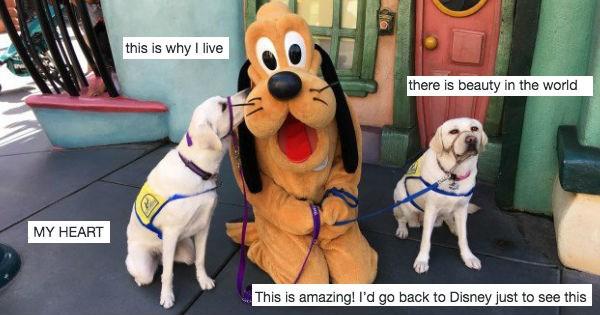 dogs twitter service dog disneyland - 1045253