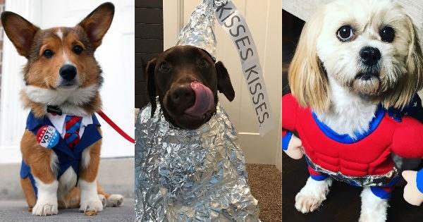 costume,dogs,halloween