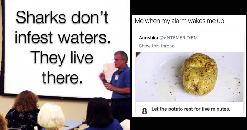 Funny random memes, tweets and Tumblr posts | classroom presentation: Sharks don't infest waters. They live there. McBang @TheMcBang my alarm wakes up Anushka @ANTEMERIDIEM Let potato rest five minutes. single potato on a plate.