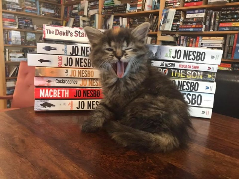 Canadian Bookstore Offers Kittens Available For Adoption | fluffy kitten yawning on a table beside a pile of books Devil's Sta Lardine JO NESBO JO NE JO NESB JO NESBO Cockroaches JO NESE JO NESBO BLOOD ON SNOW PO SON NESBO SBO MACBETH JO NESB0 1 JO NES POLICE SNOWMAN MILINE