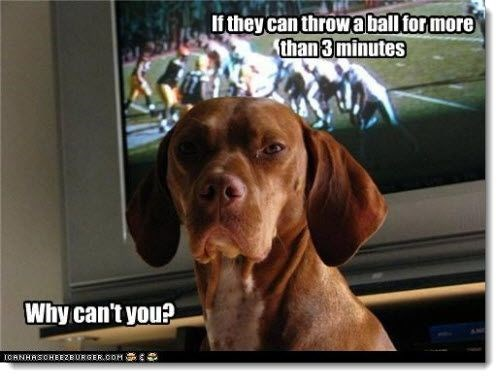 Super bowl memes | dog looking back from a football game on the tv in the background If they can throw a ball more than 3 minutes Why can't ICANHASOHEEZEURGER.COM ES
