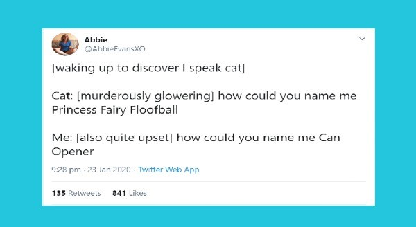 Funniest animal tweets of the week | Abbie @AbbieEvansXO [waking up discover speak cat] Cat murderously glowering could name Princess Fairy Floofball also quite upset could name Can Opener 9:28 pm 23 Jan 2020 Twitter Web App 135 Retweets 841 Likes
