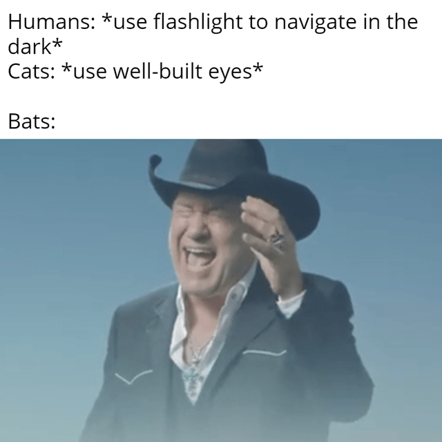 top ten 10 dank memes daily | big enough music video meme Humans use flashlight navigate dark Cats use well-built eyes Bats: