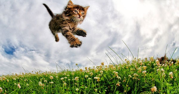 photography,kitten,Cats,pounce