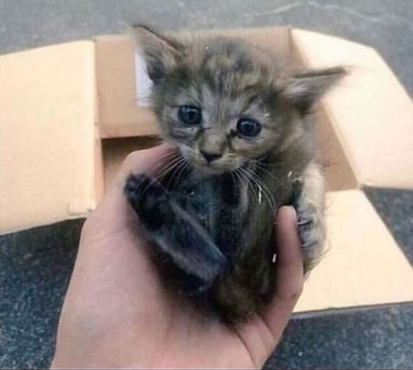 kitten cats ferrets cute wholesome story love cuddles ferret animals family | cute tiny five week old kitten held in someone's palm after being found abandoned and alone