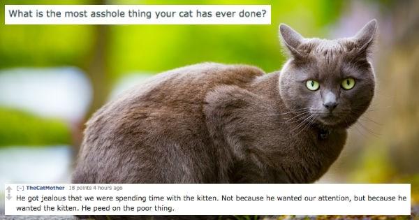 pets Reddit Cats asshole
