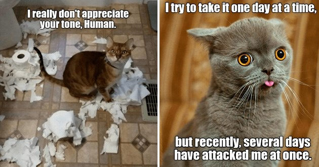 lolcats funny cat memes lol cute aww adorable animals | I really don't appreciate tone, Human. cat surrounded by shredded toilet paper. try take one day at time, but recently, several days have attacked at once. cute cat with large orange eyes sticking its tongue out