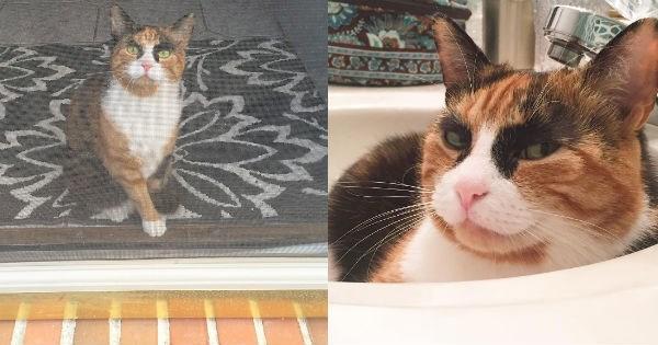 fur,judging,pets,Cats