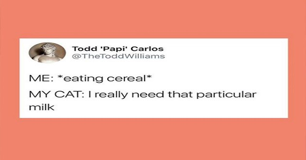 relatable cat tweet by cat owners for caturday | Todd 'Papi' Carlos @TheToddWilliams eating cereal MY CAT really need particular milk