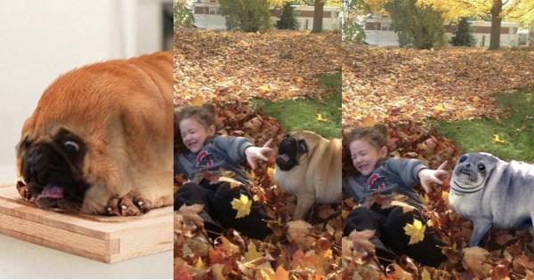 dogs photoshop battle