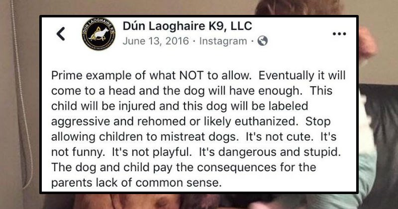 Tumblr thread explains why parents need to teach their kids to respect pets | ANAEINT Dún Laoghaire K9, LLC June 13, 2016 Instagram O HAIRE R Prime example NOT allow. Eventually will come head and dog will have enough. This child will be injured and this dog will be labeled aggressive and rehomed or likely euthanized. Stop allowing children mistreat dogs s not cute s not funny s not playful s dangerous and stupid dog and child pay consequences parents lack common sense.