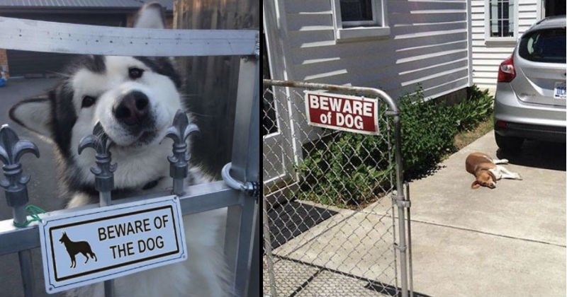 "Inaccurate ""Beware of Dog"" signs and the silly animals with them 