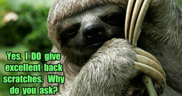 Memes,sloths,caption,sloth