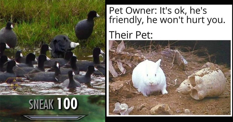 Funny random memes and tweets | black dog wearing a white badminton ball over its nose hiding among a group of black ducks with white bills. skyrim tree skill sneak 100. Pet Owner ok, he's friendly, he won't hurt Their Pet: white bunny next to a human skull