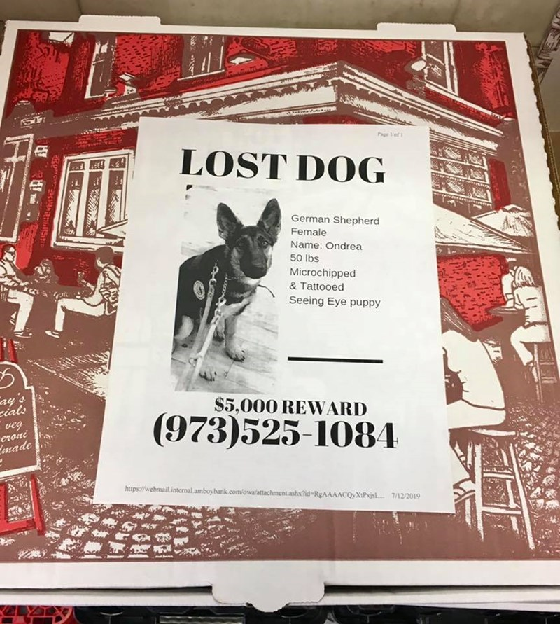 Lost Pet Flyers on Pizza Boxes | Page f LOST DOG German Shepherd Female Name: Ondrea 50 Ibs Microchipped Tattooed Seeing Eye puppy ay's cials veg eroiti Lenade $5,000 REWARD (973)525-108A http webmail.internai amboybank.com/owalattachment ash AAACQyXIPxjsl. 7/12/2019