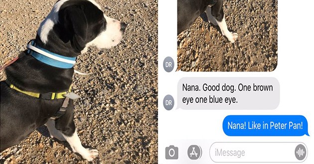 tweets wholesome dogs shelter bios twitters dog walker cute sweet aww rescue good boys thread | black and white dog on a leash JR KG DR DJKA Today 9:04 AM Dave Richardson DR Nana. Good dog. One brown eye one blue eye. DR Nana! Like Peter Pan! iMessage text messaging