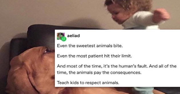 kids animals tumblr respect thread important psa teach dogs | tumblr post even the sweetest animals bite even the most patient hit their limit and most of the time it's the human's fault. and all of the time the animals pay the consequences teach kids to respect animals photo of a small child jumping on top of a large dog