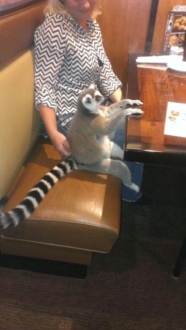 Woman Brings Lemur For a Dinner At restaurant | lemur with a long striped tail sitting in a restaurant booth with its paws on the table as if its waiting for the food it ordered, a blonde woman in a black and white patterned shirt sits beside it with her hand on the lemur's back