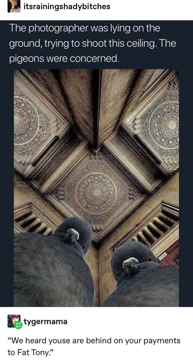 top ten 10 tumblr posts daily | itsrainingshadybitches photographer lying on ground, trying shoot this ceiling pigeons were concerned. 111- tygermama heard youse are behind on payments Fat Tony.