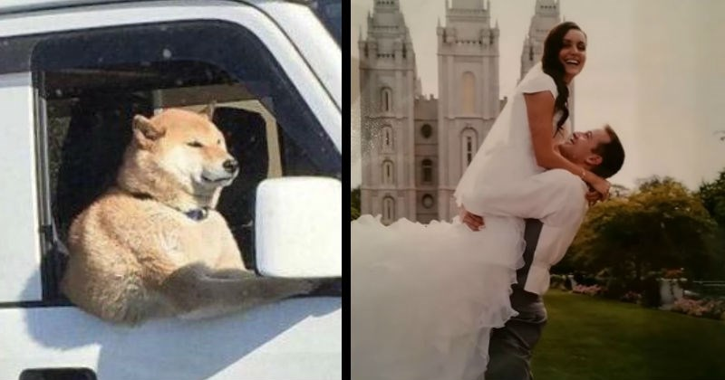 Optical illusions caused by strange weird perspective double take eye trick | shiba inu dog sitting in the passenger seat of a car appearing extremely buff and leaning its massive bicep on the window. wedding photo groom in white shirt holding up a bride with a long veil that appears to be coming out of her butt.