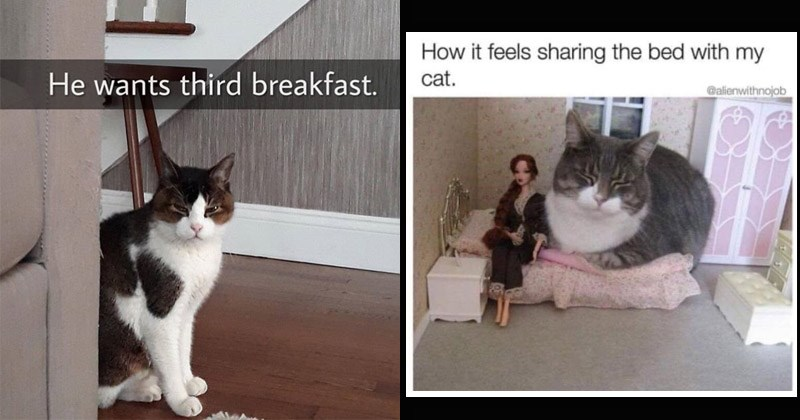 Funny cat memes | white cat with dark spots sitting behind a couch squinting in anger: He wants third breakfast. real cat sitting on a bed in a toy house bedroom next to barbie: feels sharing bed with my cat