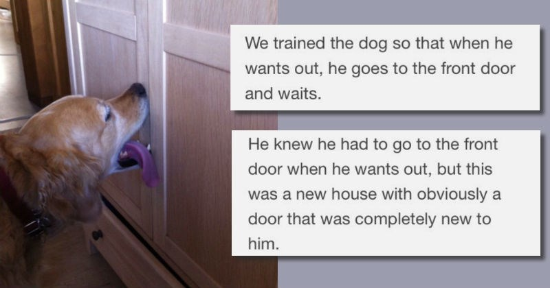 dogs list new house trained story moving funny animals - 1057285