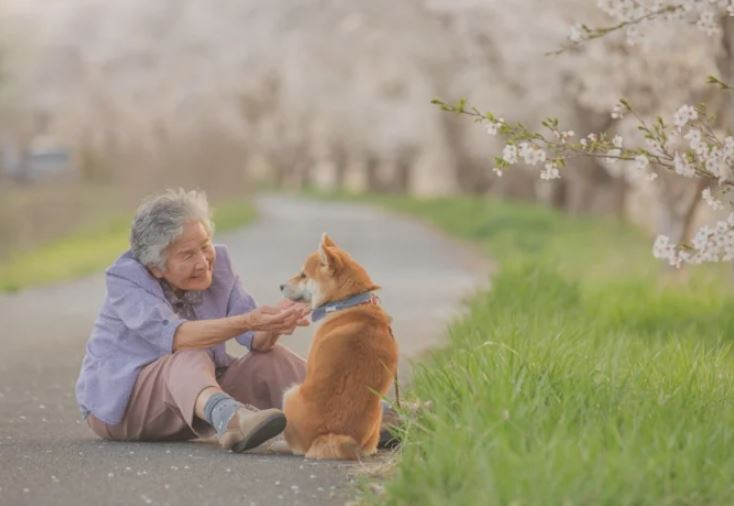 photography shiba inu woman art animals dogs japan japanese beautiful pets deep bond wholesome heartwarming | elderly woman in a lilac shirt and brown pants sitting on a trail among grass and playing with a shiba inu dog wearing a blue collar