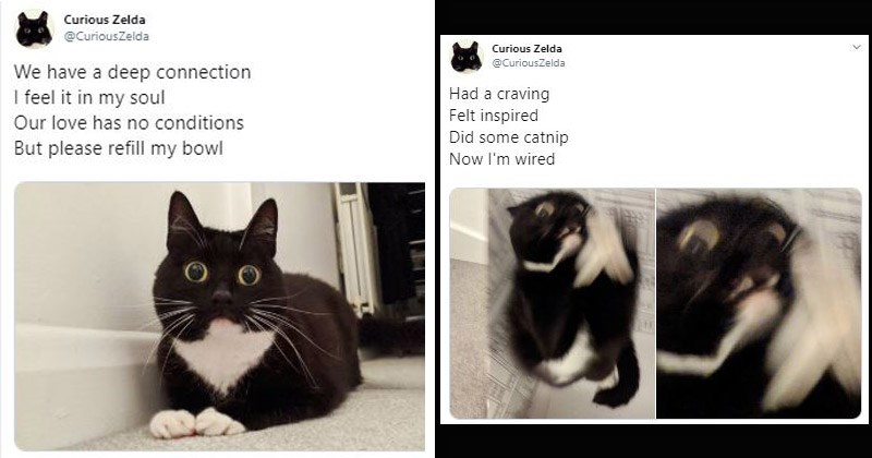 Funny, cute, and poetic cat tweets from Twitter account 'Curious Zelda' | tweet haiku black and white cat with large yellow eyes Curious Zelda @CuriousZelda have deep connection feel my soul Our love has no conditions But please refill my bowl Had craving Felt inspired Did some catnip Now wired.