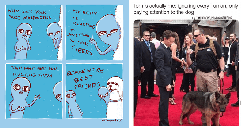animal memes, comics, and posts, cute animals, wholesome memes | aliens comic WHY DOES FACE MALFUNCTION MY BODY REACTING SOMETHING THESE FIBERS THEN WHY ARE TOUCHING THEM BECAUSE BEST FRIENDS NATHANWPYLE. actor tom holland in a suit on a red carpet event: Tom is actually ignoring every human, only paying attention dog