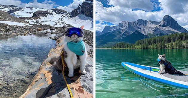 cool cat adventure gary instagram awesome photography snow | cool cat at bow glacier wearing a teal bandanna and diving mask goggles and a yellow rope harness sitting on a rock by a lake in front of a background of snowy mountains, same cat in canmore alberta sitting on a surfing board paddleboarding gliding over water in front of amazing nature scene mountains forest in the background