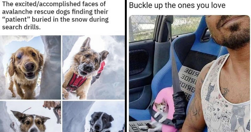Funny and nice wholesome memes | excited/accomplished faces avalanche rescue dogs finding their patient buried snow during search drills. four dogs looking down a snowy hole. Buckle up ones love person taking selfie in a car with a tiny kitten strapped safely in the passenger seat